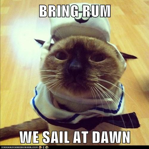 A cat in a sailor's outfit